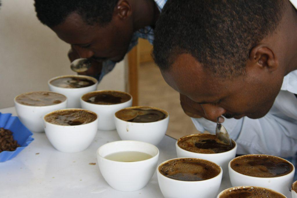 Kava Etiopija