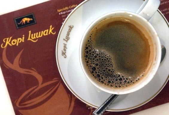 kopi luwak kava